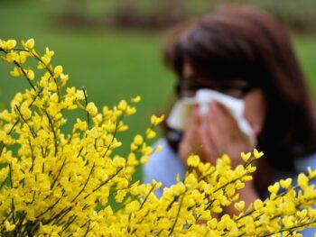 se protéger allergie pollen